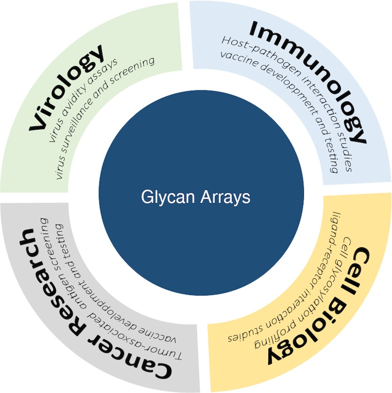 Major applications of glycan arrays done by Innopsys' users