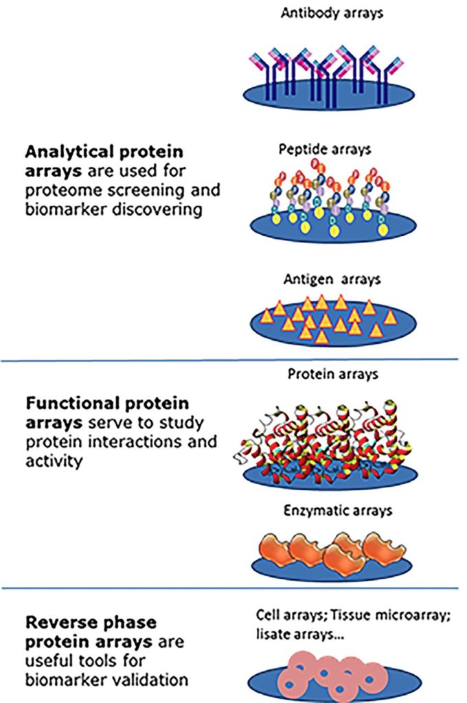 Different type of protein arrays for which InnoScan scanners are compatible